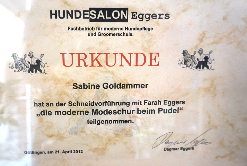 Zertifikat 4